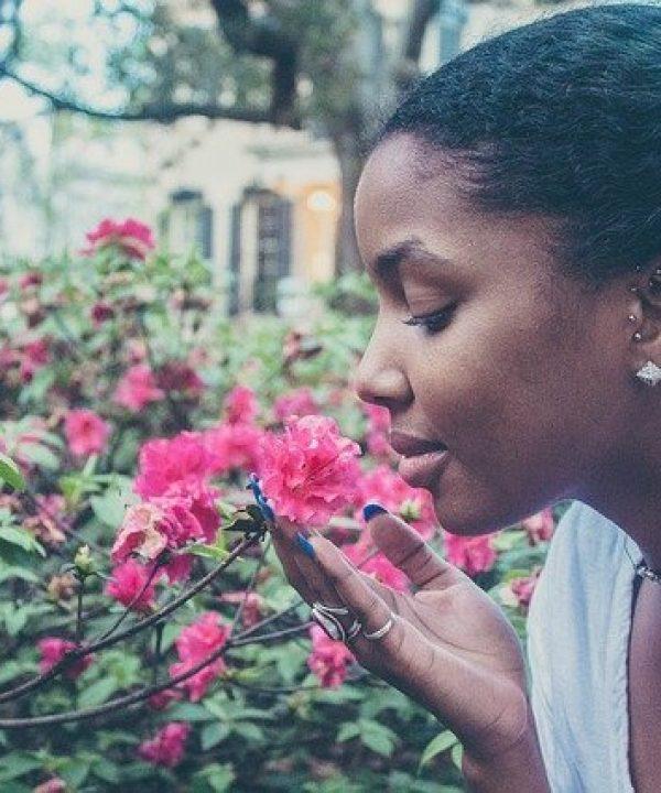 flowers-731300_640
